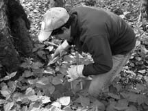 The harvest: New harverster picks nettles during an expedition with wild plant expert Doreen Bonin.